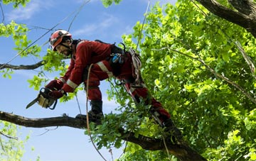 find trusted rated City Of Edinburgh tree surgeons